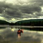 Moose at Long Pond by Wayne King