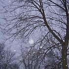 Snow by Liona