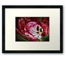 Requiem for a Tulip - Collaboration with monocotylidono Framed Print