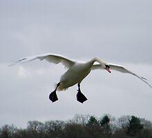 In Flight by Rikki Walker