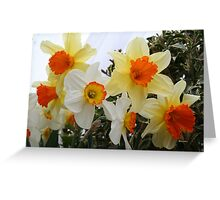 Daffodils! 2010 Greeting Card