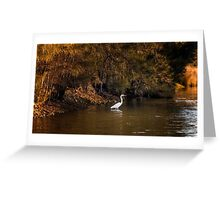 Egret - Beauty in the light Greeting Card