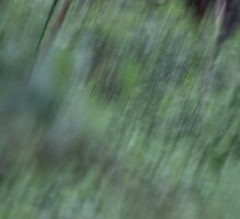 A Spring Rain in the Forest by Gilda Axelrod