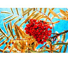 Ashberry artistic Photographic Print