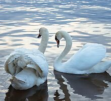 Swans by creative-soul