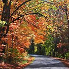 The Colour of Autumn by Kate Adams