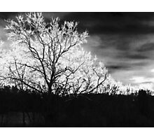 The Trees Photographic Print