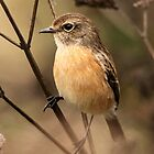 How many stones can a stonechat chat.... ? by Graeme M