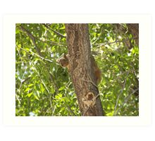Simply Shy St. Anthony Squirrel Art Print