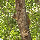 Simply Shy St. Anthony Squirrel by shutterup