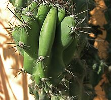Cactus Close-up 2 by Christopher Johnson
