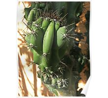 Cactus Close-up 2 Poster