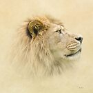 Lion portrait II by peaky40