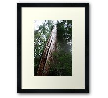 That's one big tree Framed Print