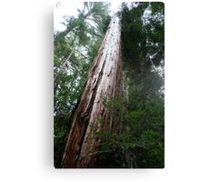 That's one big tree Canvas Print