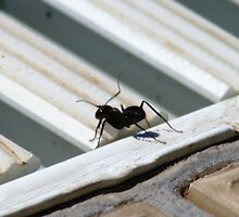 Ant by Havoc