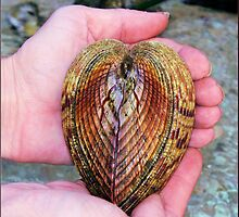 Heart of the sea by DIANE KLEVECKA