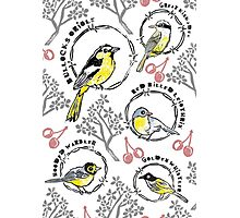 Birds & Barbed Wire Photographic Print