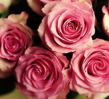 Fresh Roses by christielynne
