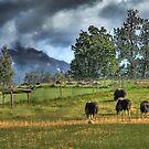 Musk Oxen by Dyle Warren
