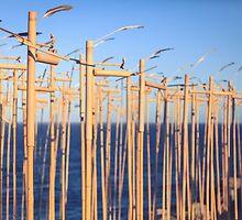 SCULPTURES BY THE SEA BONDI BEACH by megandunn
