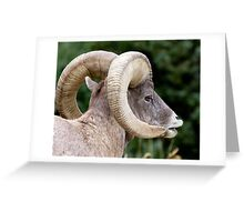 Famous Bighorn Ram Greeting Card