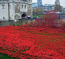 Poppies at London Tower by Macker