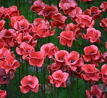 Ceramic Poppies by Macker