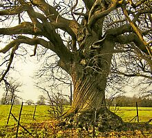 TREE -  EARSHAM, NORFOLK by ANNETTE HAGGER