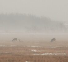 Three Deer In The Mist by Stephen Thomas