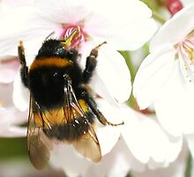 Busy Bee:) by Martina Fagan