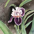 Purple Iris by arline wagner