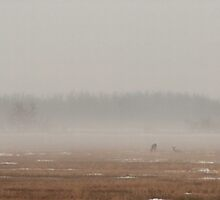 Four Deer In The Mist by Stephen Thomas