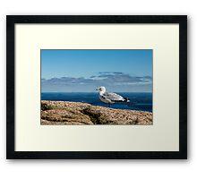 Seagull on Mountain Framed Print