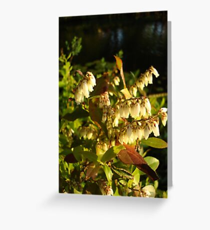 HIGH BUSH BLUEBERRY Greeting Card