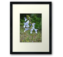 LYRE LEAF SAGE - A BEAUTIFUL FLORIDA WILDFLOWER Framed Print