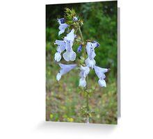 LYRE LEAF SAGE - A BEAUTIFUL FLORIDA WILDFLOWER Greeting Card
