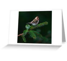 Spruce Ornament Greeting Card
