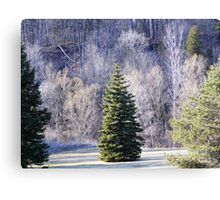 Ready for Christmas. Canvas Print
