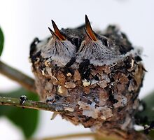 Hummingbird Nest by Steven Buffington