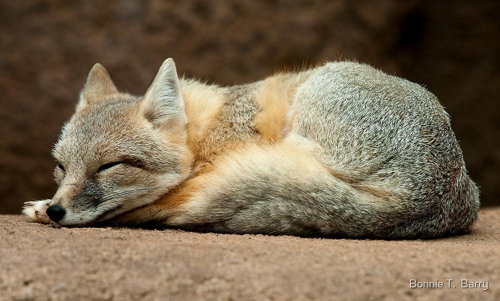 Little Sleeping Fox by Bonnie T.  Barry