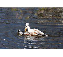 Dunkin Duck Photographic Print