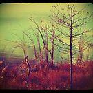 Bush by the Water ttv by KadesRave67