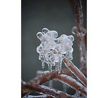 Ice Flower Photographic Print
