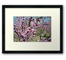 Peach Time Framed Print