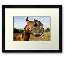 Inquisitive horse Framed Print