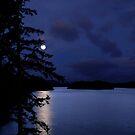Winter moon by VickiOBrien