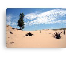 sand tree Canvas Print