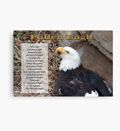 Fallen Eagle Canvas Print