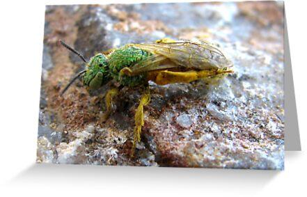 Metallic Green Bee ~ Male by Kimberly Chadwick